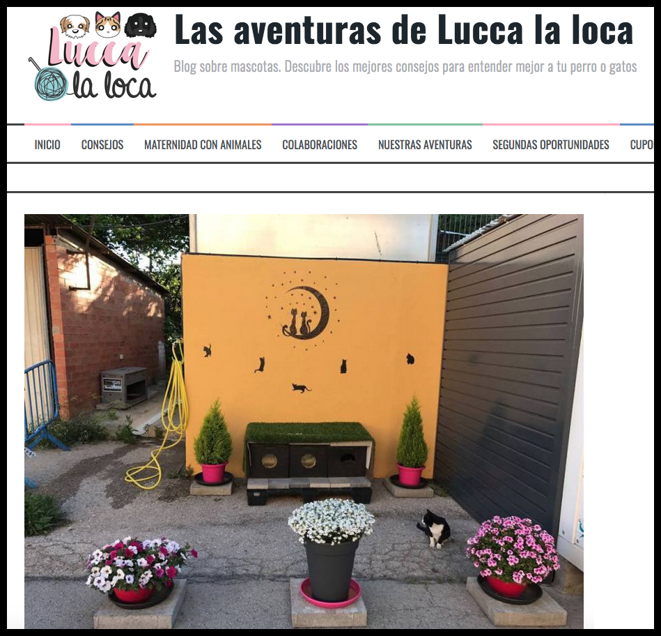 lucca.png